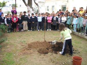 Plantación de un almez en el colegio Cristóbal Colón.