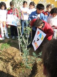 Plantación del olivo en el Esqueleto el Día de la Paz de 2008.