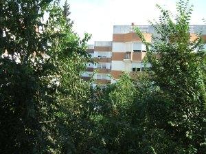 La frondosidad de los árboles de La Oliva atrae a multitud de aves.