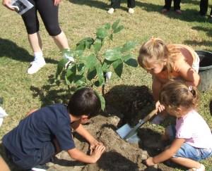 Los niños plantando un árbol pulpo.