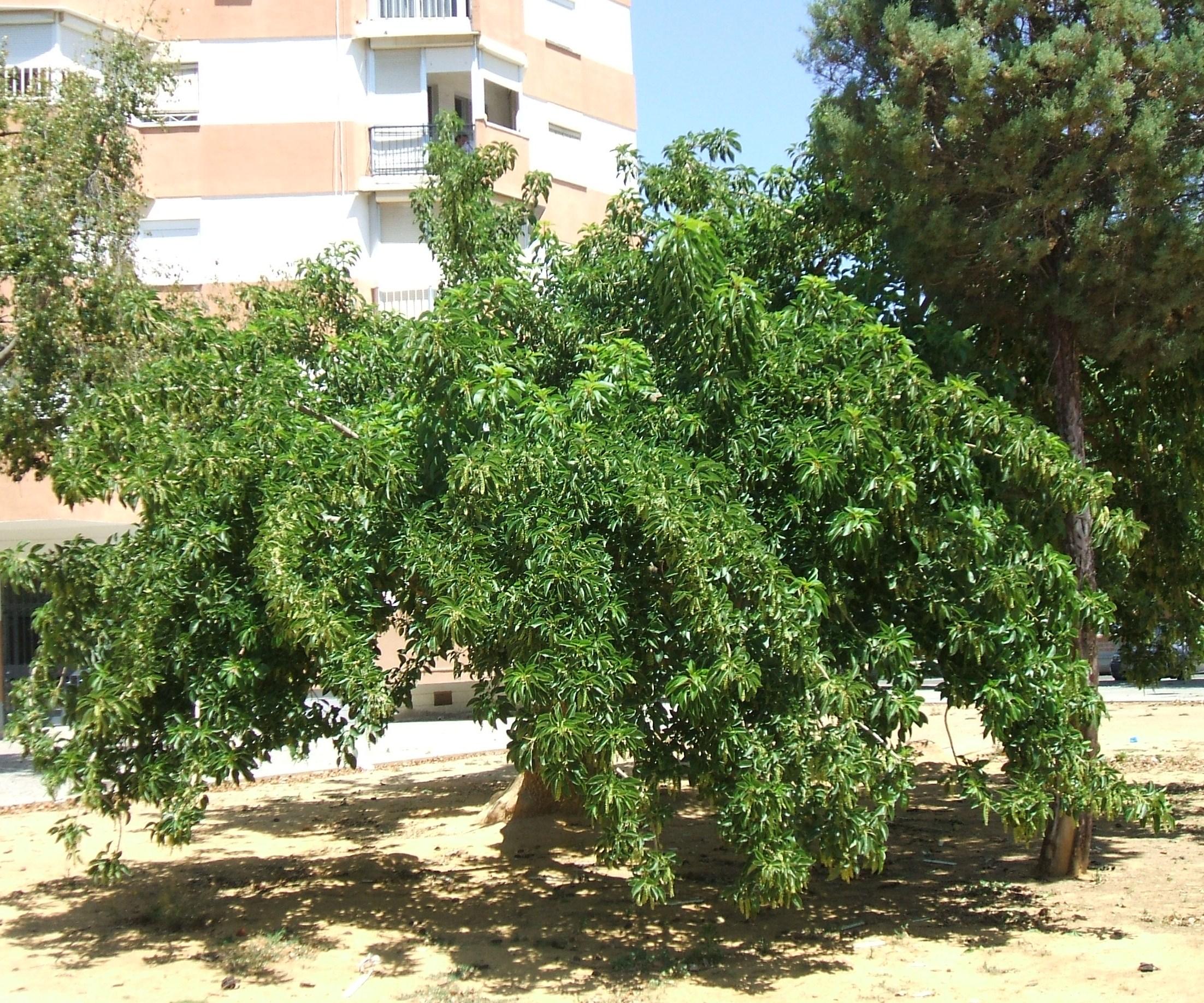 bella sombra asociaci n amigos de los jardines de la oliva