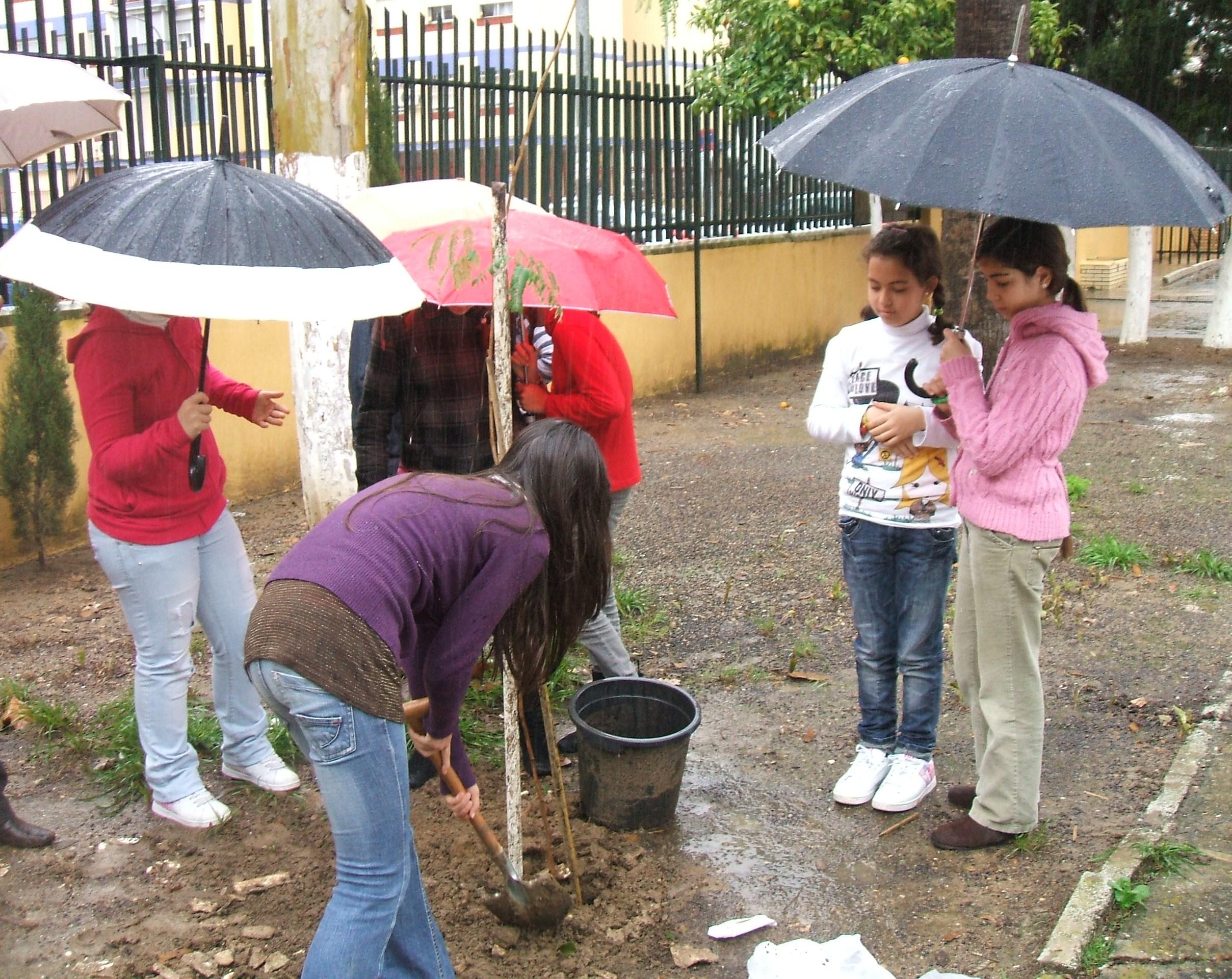 A pesar de la intensa lluvia los alumnos plantaron el aromo blanco