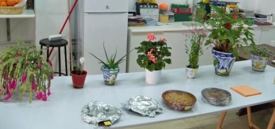 Plantas bulbosas asociaci n amigos de los jardines de la - Macetas para cocina ...