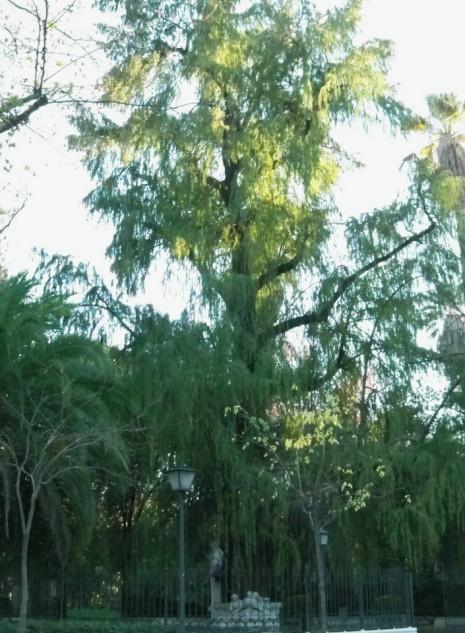 1.- El taxodio encerrado entre rejas en la espesura verde destaca el blanco marmóreo del monumento a Bécquer