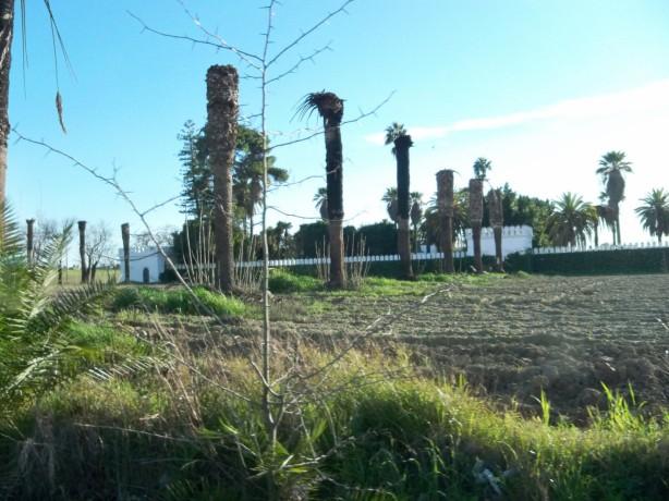 Ep picudo rojo ataca la Hacienda de Torrijos