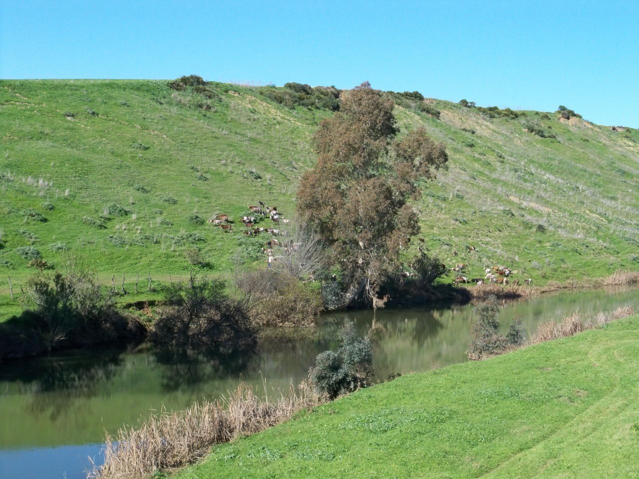 gerena asociaci n amigos de los jardines de la oliva