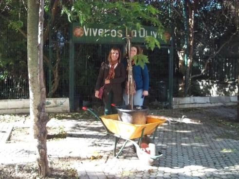 Paqui y Charo, del AMPA del colegio España, recogiendo el brachichito rojo del Vivero de La Oliva.