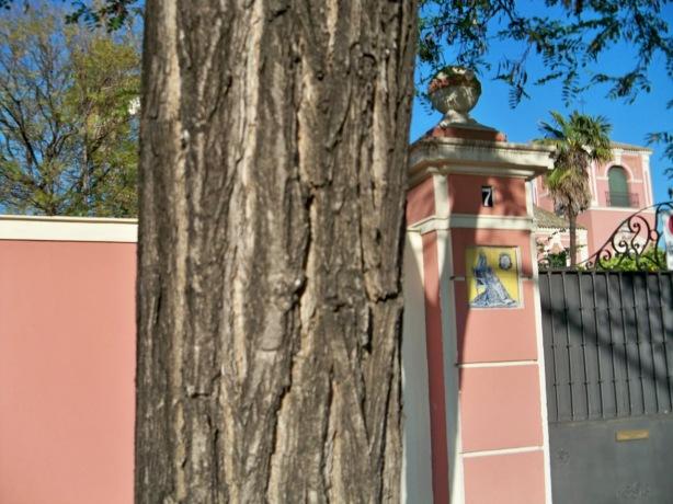 Detalle del tronco de la falsa acacia