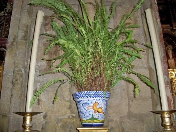 Maceta de cerámica trianera con helecho basto en la Iglesia de Sata Ana de Triana
