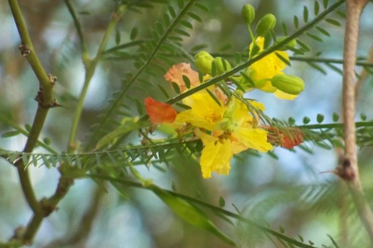 detalle de la flor y espinas de las ramas