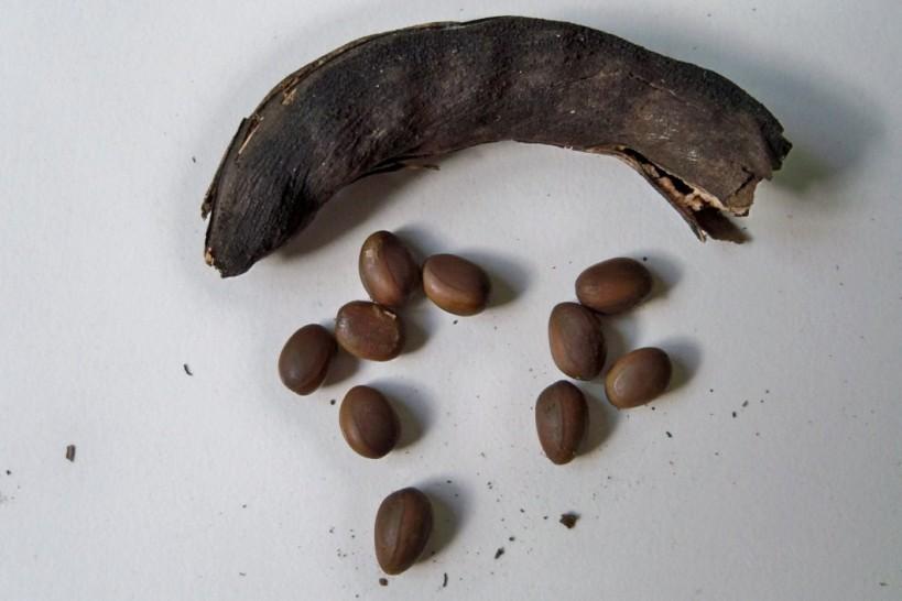 Detalle del fruto y las semillas