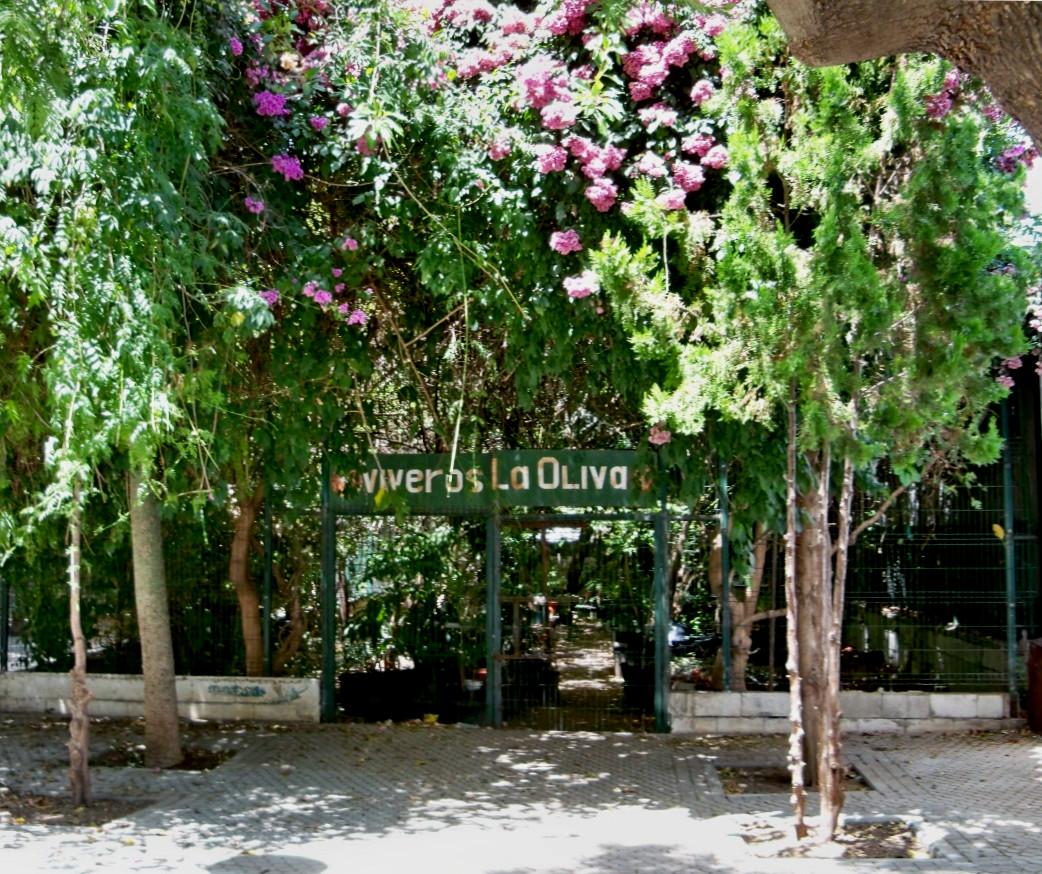 Vivero de la oliva asociaci n amigos de los jardines de for Vivero arboles grandes