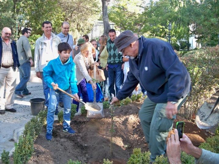 Plantación del Algarrobo chileno
