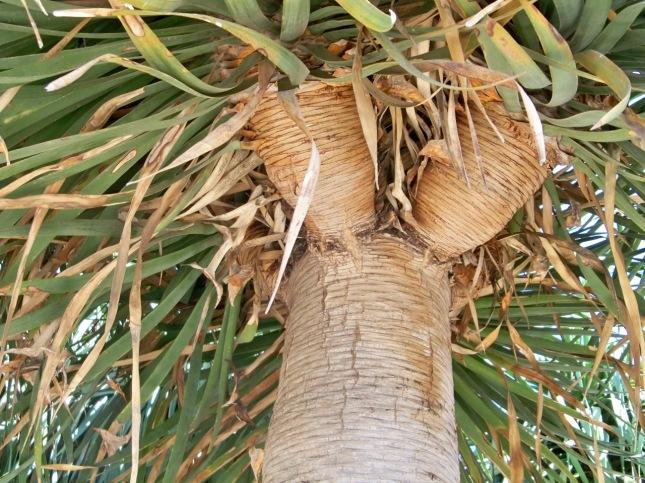 Detalles del tronco