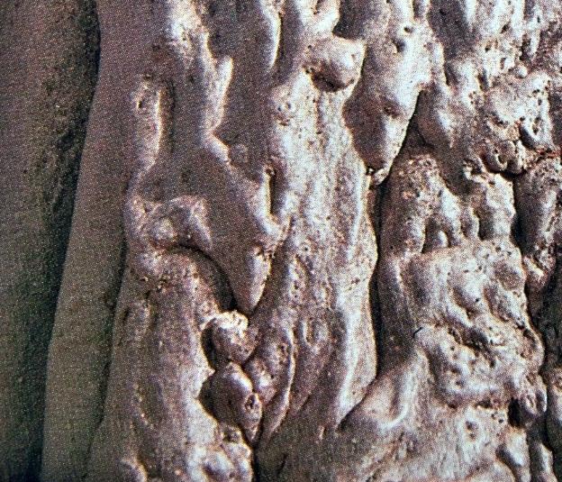 Detalle de la corteza del baobab
