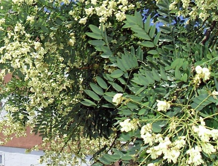 Detalles de las hojas y las flores