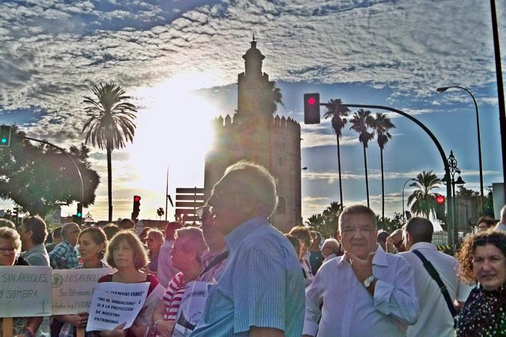 Le pedimos al equipo de gobierno del Ayuntamiento de Sevilla: Arboricidio ¡NO!