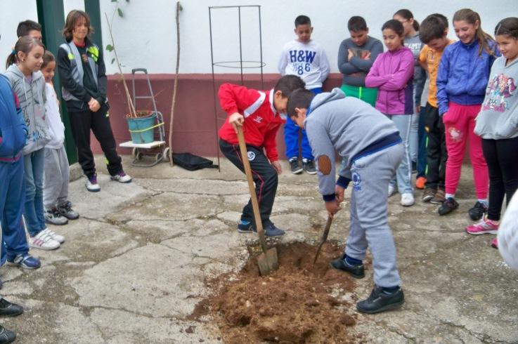 Los alumnos del colegio Manuel Canela cavando el hoyo para plantar el árbol