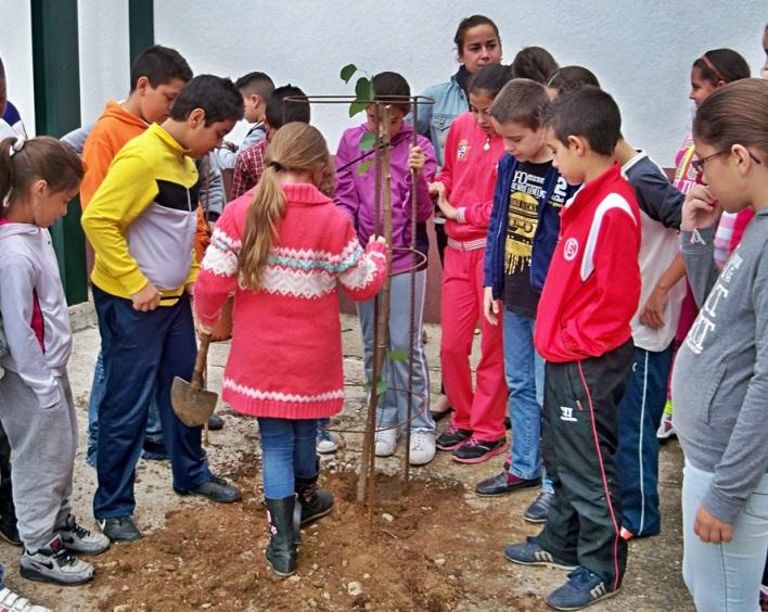 Los alumnos del colegio Manuel Canela plantando la Bauhinia variegata en el patio de recreo.