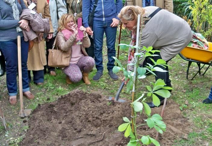 Lola Palomino Aguilar, delegada de Parques y Jardines de Cádiz, colaborando en la Plantación.