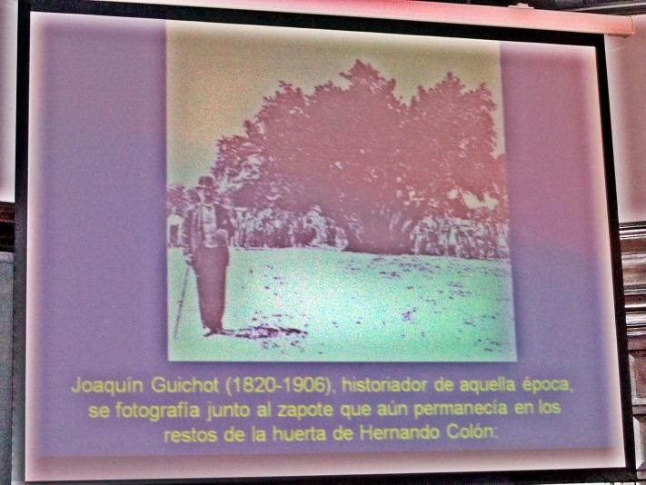 Fotografía del zapote plantado por Hernando Colón y que fue talado poco después de realizarse esta fotografía.