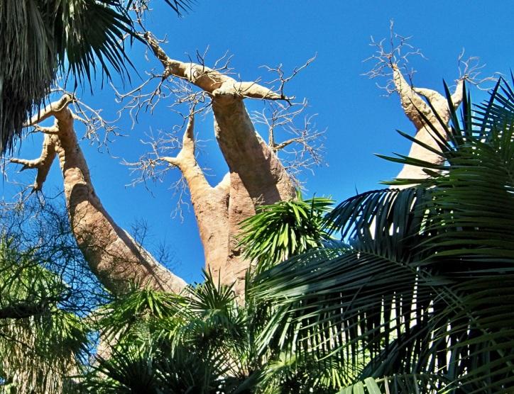 El baobab artificial del zoológico de Bioparc.