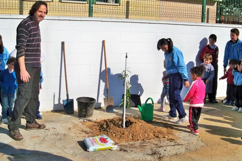Plantación de un podocarpo en el patio de recreo del colegio Juan XXIII