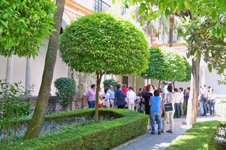 En el Patio del Claustro Mayor, Jacinto explica las caracteristicas de la palmera livistona.