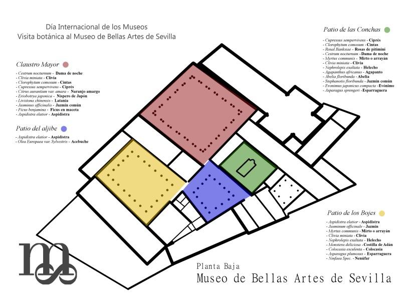 Plano de los patios del Museo de Bellas Artes y las especies que hay en cada uno de ellos