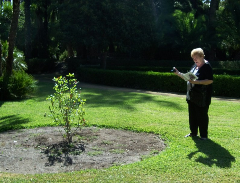 Rosa Guallart, fotografiando al magnolio caduco.