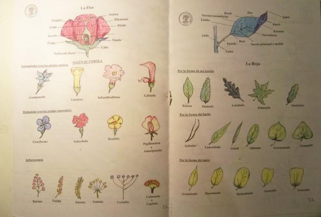 Páginas de la Guía Botánica que hemos elaborado para el colegio Manuel Canela.