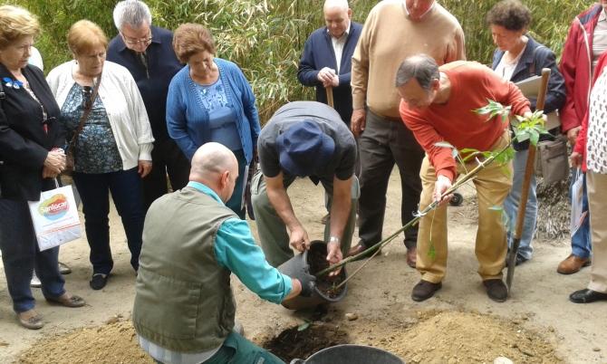 Plantando el palo borracho en el jardín del Palacio de Orleáns.