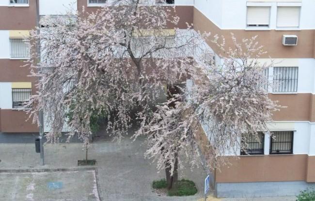 Árbol del amor blanco