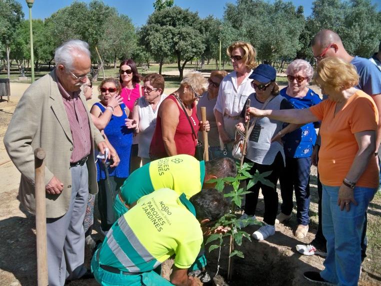 Plantación de un árbol en el parque de Bermejales