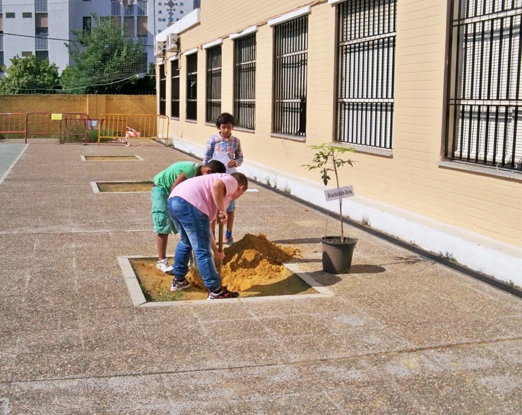 Los alumnos cavando el hoyo para plantar el brachichito rosa.