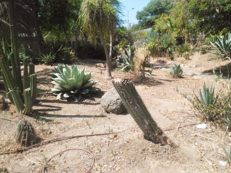 Así está el jardín de las Cactáceas del Jardín Americano. ¡Una lástima!