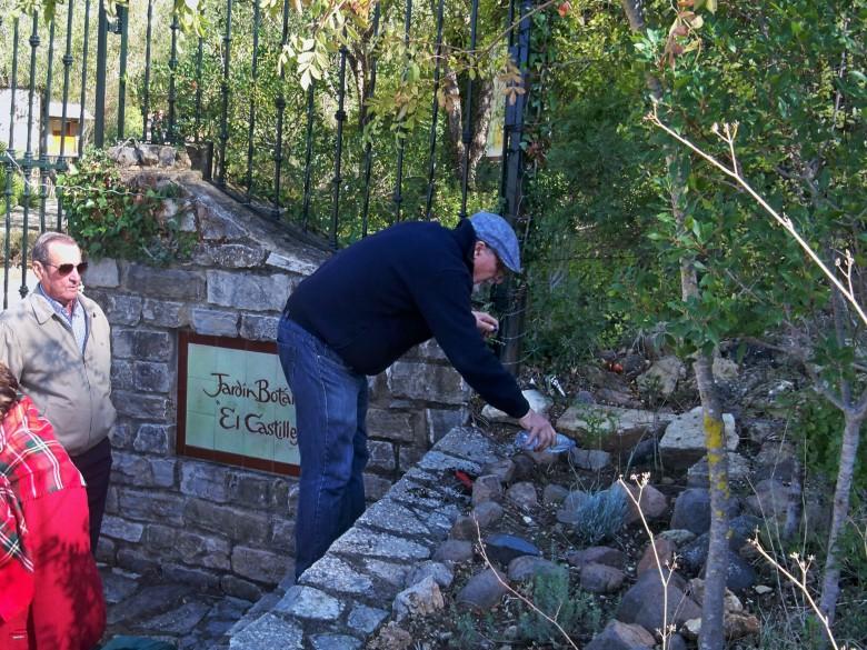 """Plantación de una tara en la entrada del Jardín Botánico """"El Castillejo"""""""