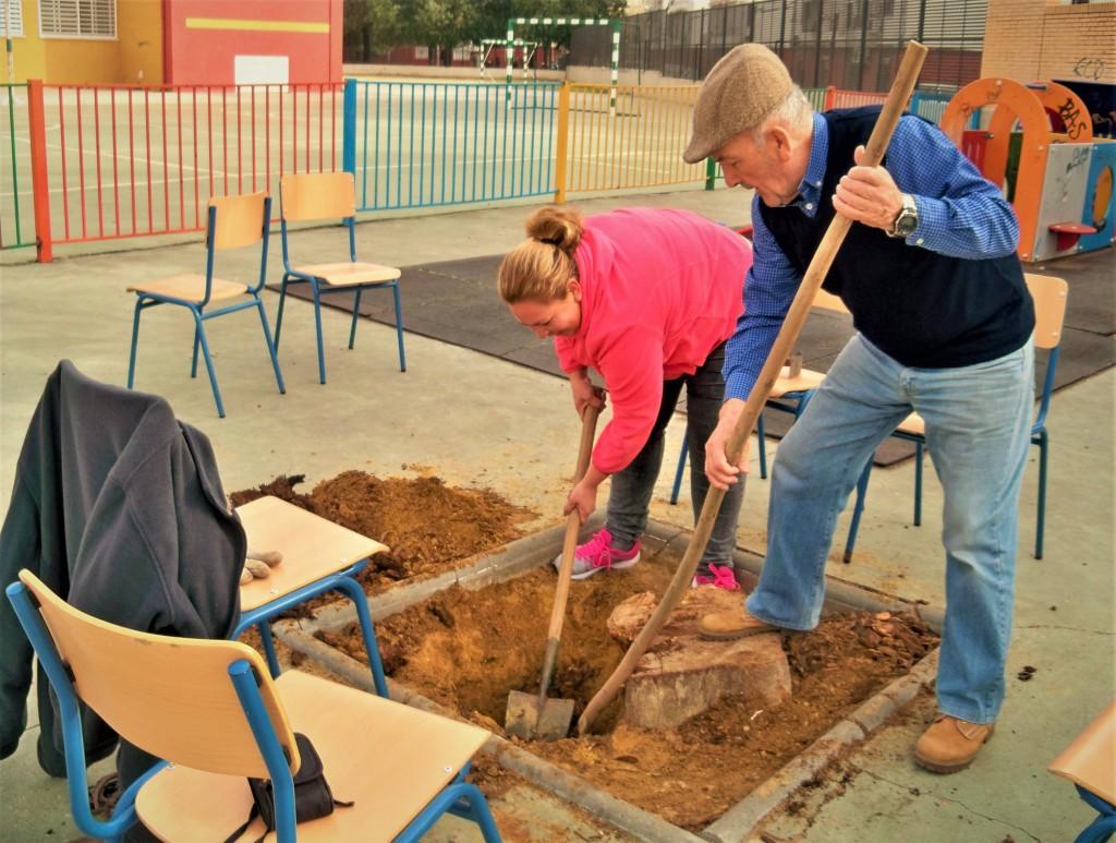 Cavando el hoyo para plantar el árbol.