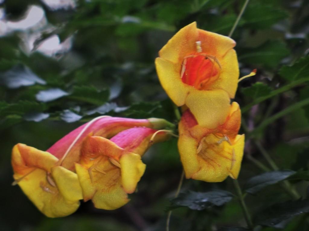 2.- las flores